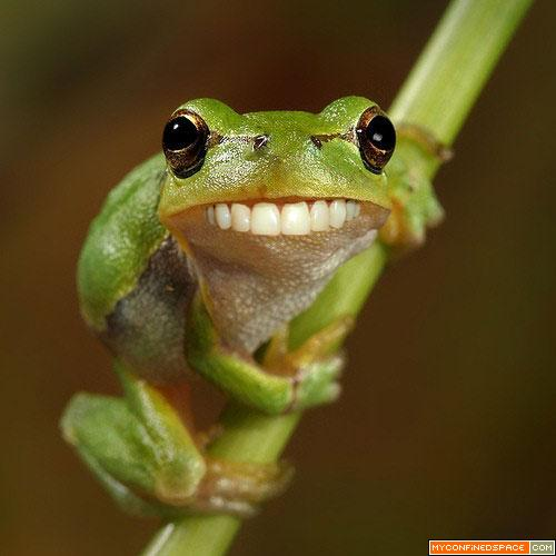Funny animals funny frog photos - Funny frog pictures ...